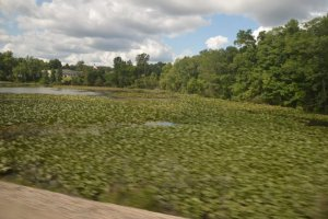 Michigan Pond.jpg