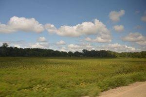 Michigan Scenery .jpg