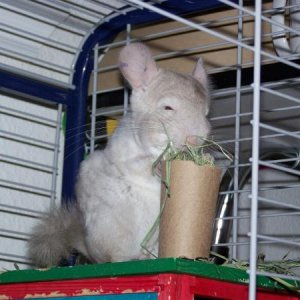 Paper tube stuffed with hay. Their first homemade toy!