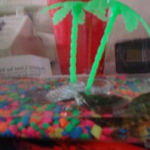 my turtles jojo and lulu