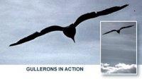 gullerons in action.jpg