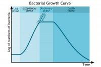 bacterial_growth_curve.jpg