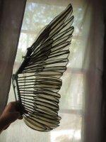 WingExtended2.jpg