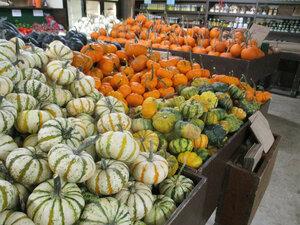 pumpkins 3a.JPG