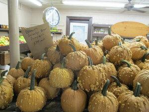 pumpkins 5a.JPG