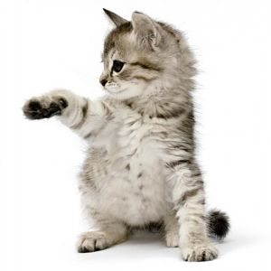 5 Star Cattery in Melbourne East - Cats R Us
