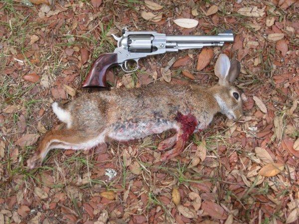 Lane Rabbit1 5-26-15.JPG