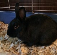 Junior the bunny.jpg