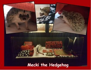 Mecki collage low res.jpg