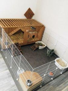 Bunny Cage 2.jpg