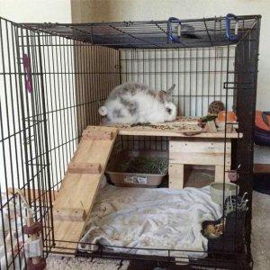 Bunny Cage 3.jpg
