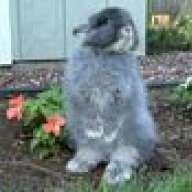 Starlight Rabbitry