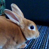 Remy The Rabbit