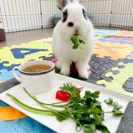 Sweet Potato rabbit