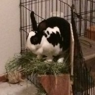 4 bunny Mom