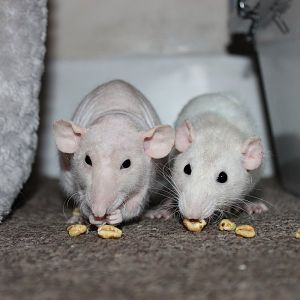 Penny and Pearl